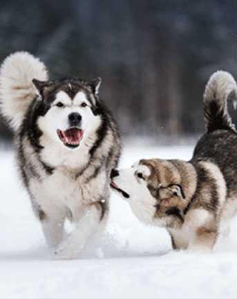 Dog-Gallery