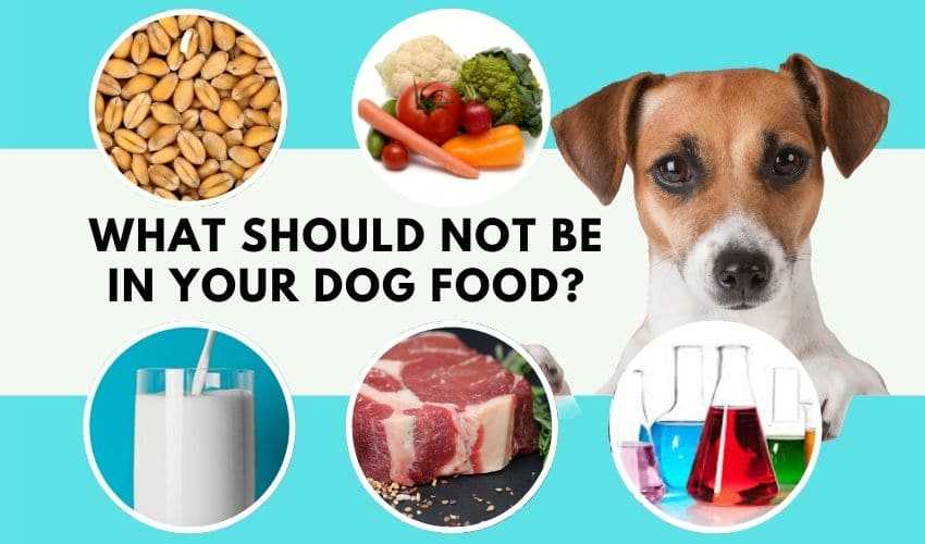 What should not be in your dog food