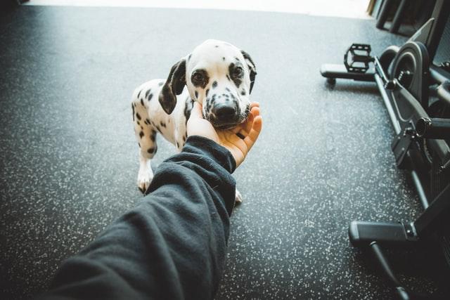 the cutest dog breed - dalmatian